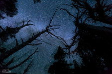Aurora kicked the camera by mistake a quarter of the way during this long exposure, giving the final composition a dizzying effect. We especially like the stars that appear to shine through the trunk of the tree on the left as a result. See if you can spot the Andromeda galaxy in the embrace of the dried out branches.