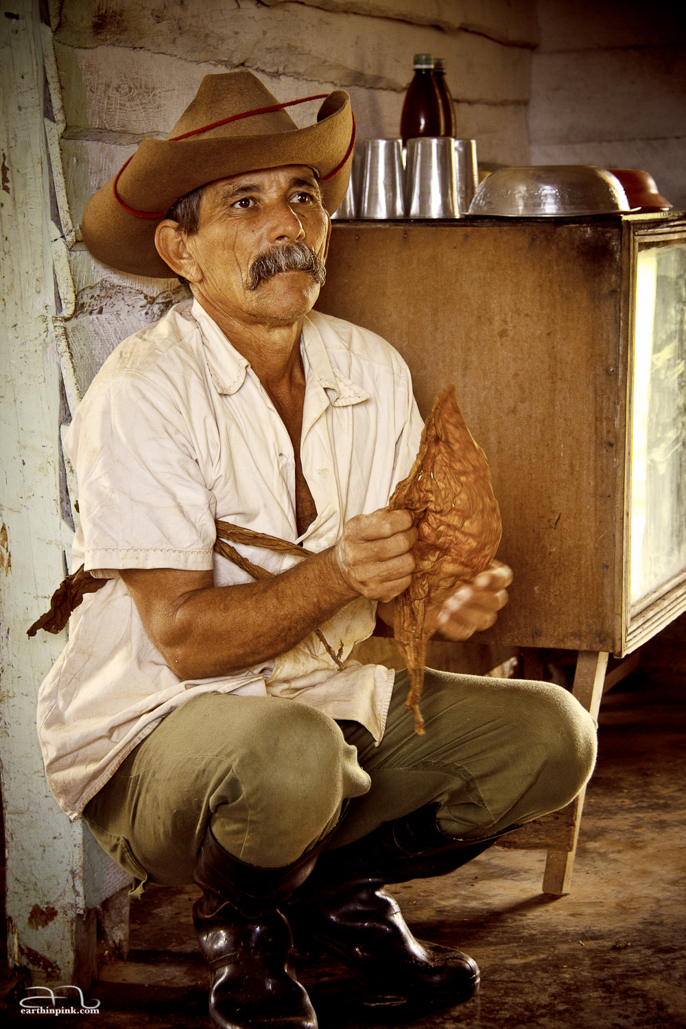 Tobacco farmer in Viñales, Cuba, demonstrating how to roll a cigar