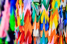 Millions of paper cranes are offered each year to the Hiroshima Peace Memorial Park, as prayers for peace and the end of all the world's conflicts.
