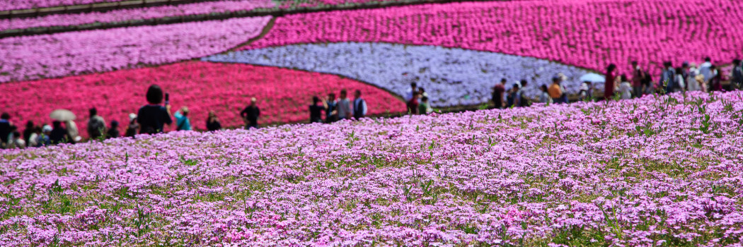 Flower field frenzy