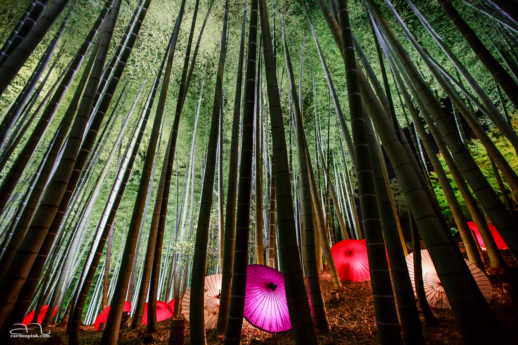 Illuminated umbrellas scattered throughout the bamboo forest at Kodaiji temple.