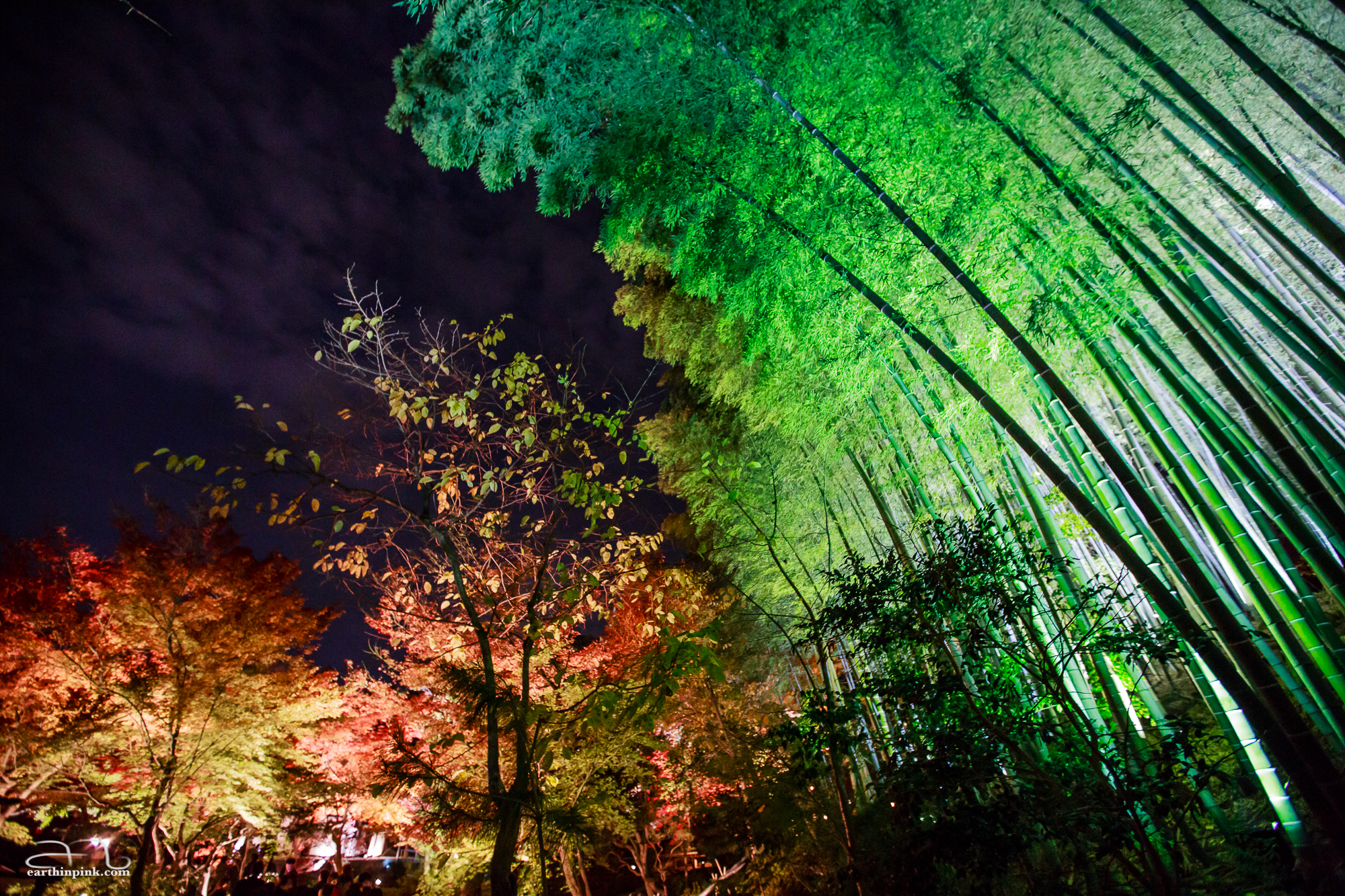 Night illumination at the Kodaiji temple in Kyoto.