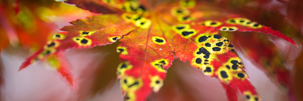 Ten shades of autumn in Japan