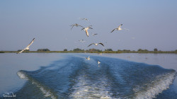 Seagulls following us and the wake of our boat.