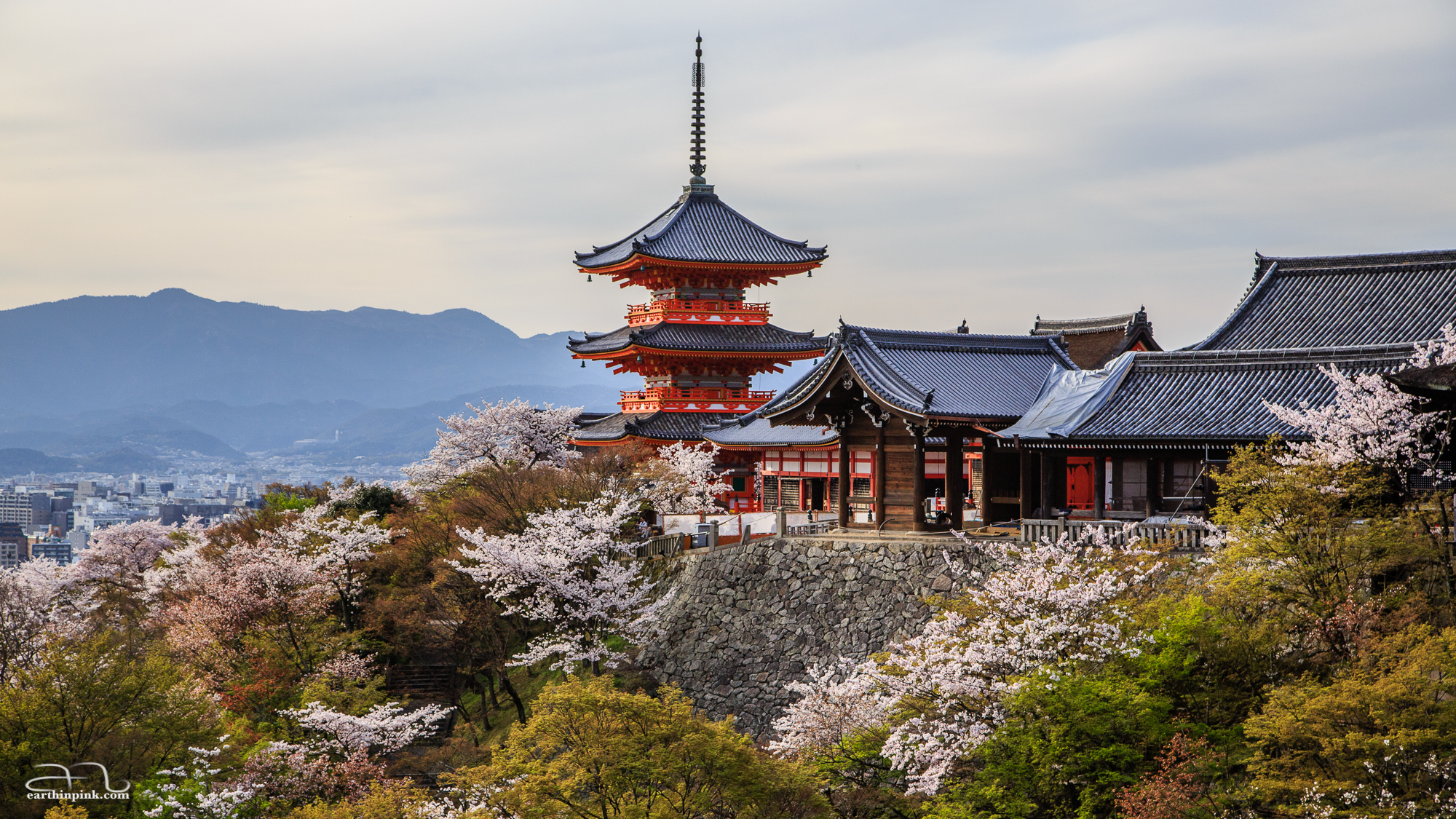 The pagoda near the entrance of Kiyomizu-dera, perched on a hill dappled with cherry trees in full bloom.