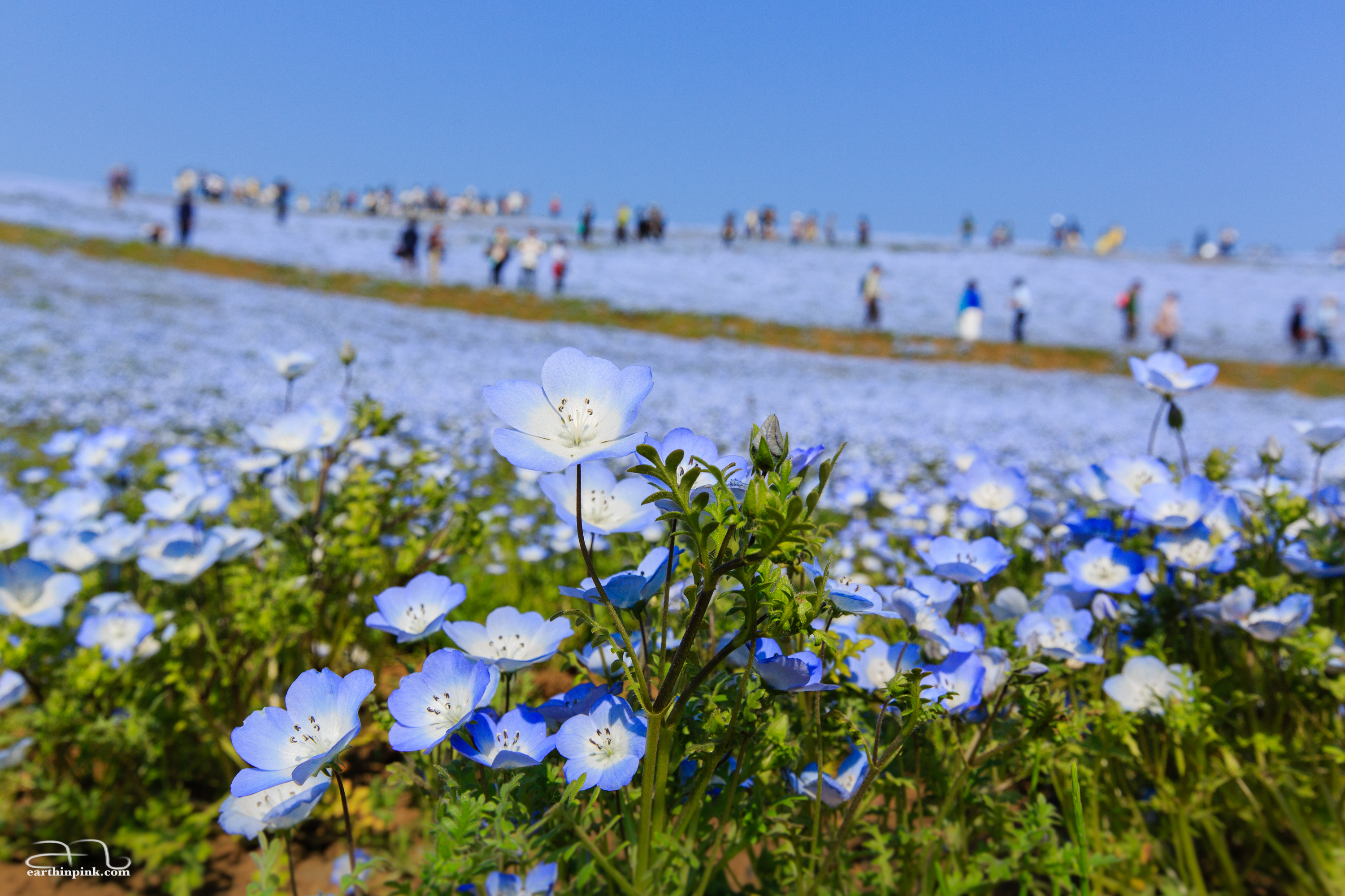 The ground and the sky become one at Hitachi Seaside park, Ibaraki.