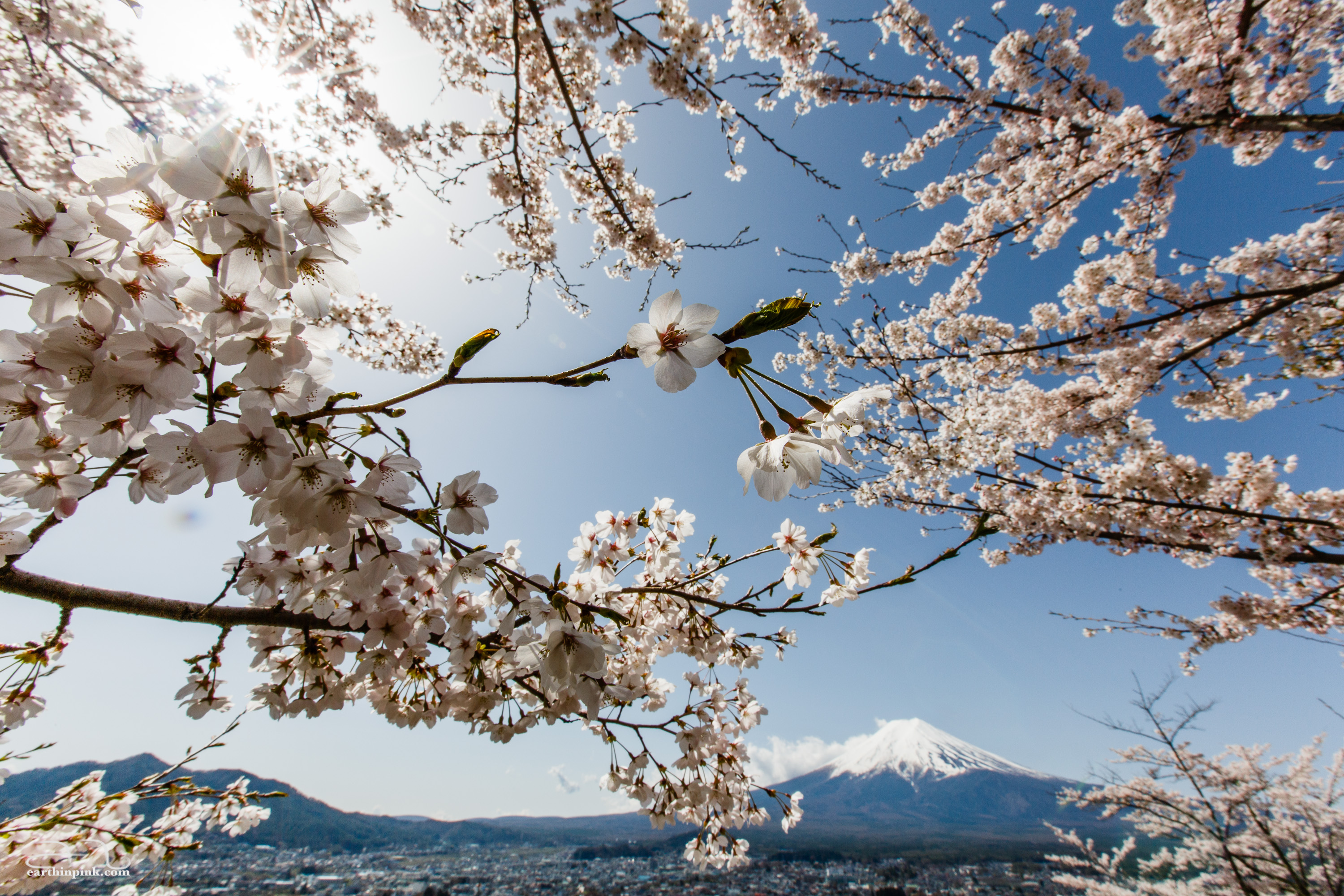 View of Mount Fuji among cherry blossoms from the park next to Kawaguchi Asama Shrine. Probably the best sakura-viewing day trip outside of Tokyo on a clear day.