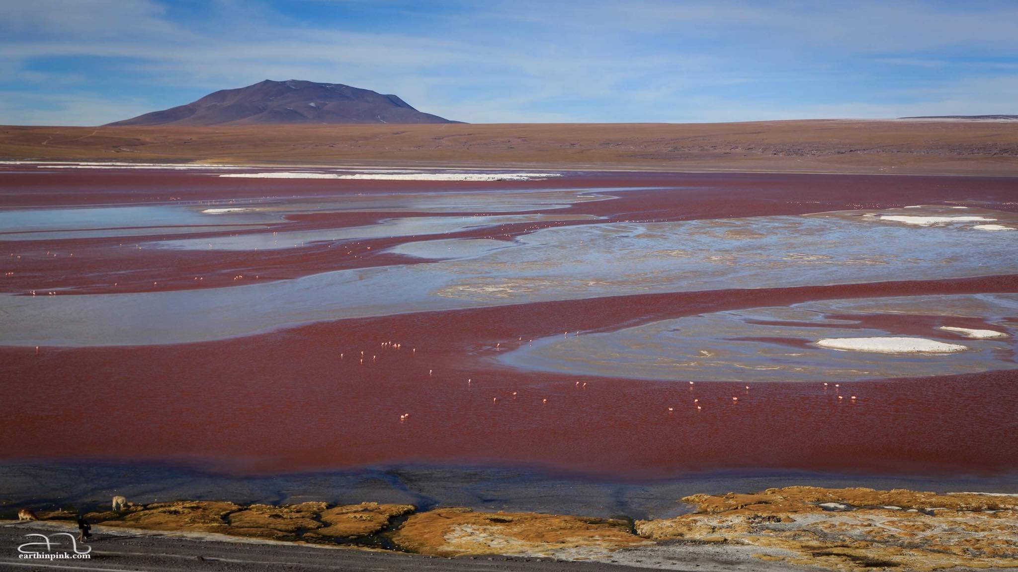 Laguna Colorada, Bolivian Altiplano