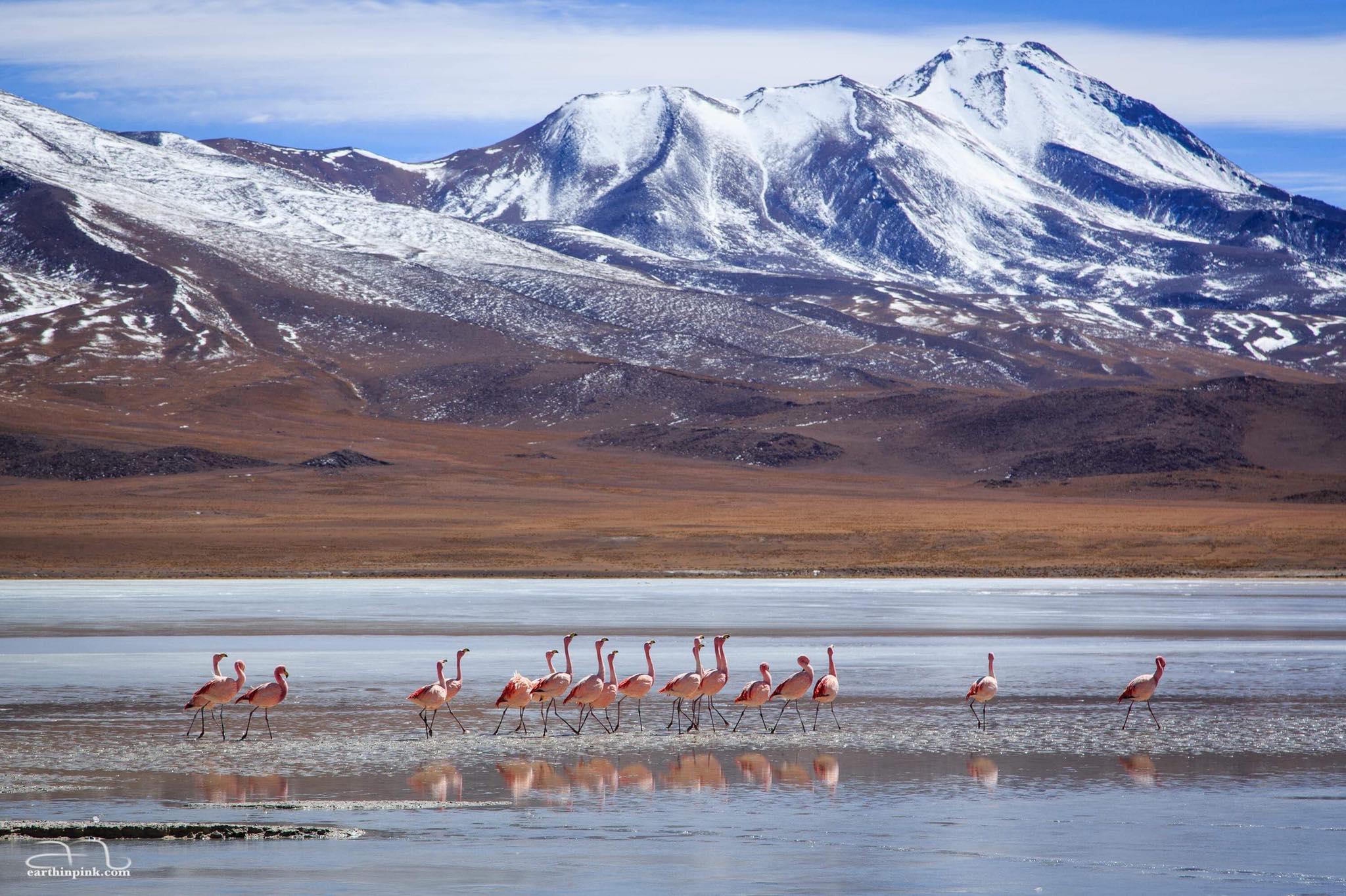 Laguna Hedionda, Bolivian Altiplano